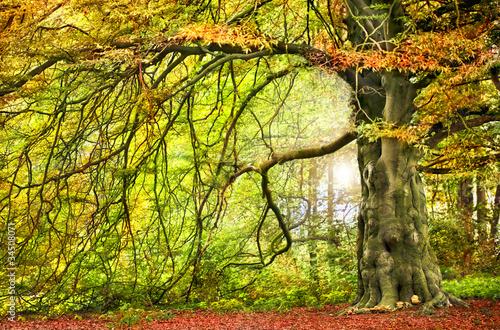 Fototapety do jadalni duze-jesienne-drzewo