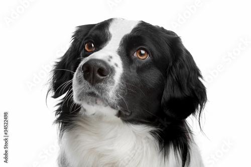 Photo  mixed breed dog