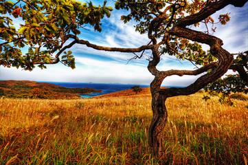 Fototapeta Drzewa trees growing on an island