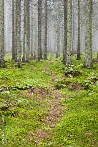 Foto auf Acrylglas Wald im Nebel Hiking trail through a forest