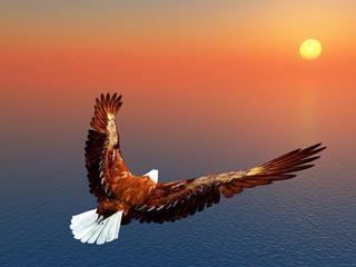 Fototapeta na wymiar Sea Eagle