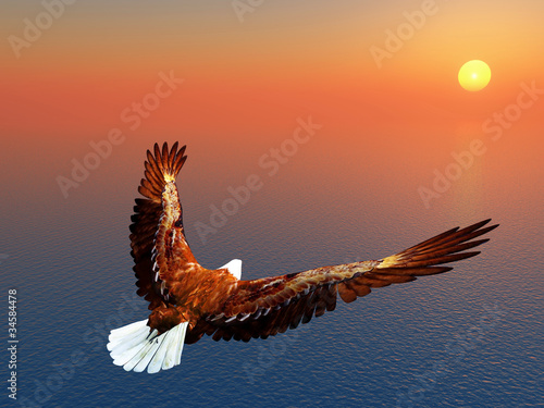 Fototapeta Sea Eagle