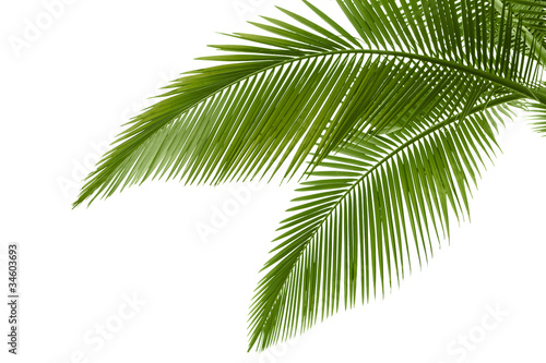 Deurstickers Palm boom Palm leaves