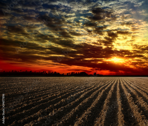 Fototapeta pole o zachodzie słońca
