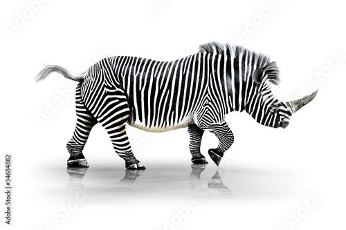 Staande foto Zebra Zebra-Horn