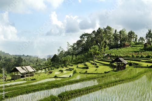 Foto op Plexiglas Indonesië rice field landscape in bali indonesia