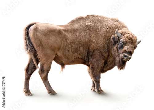 Poster de jardin Buffalo european bison isolated on white background