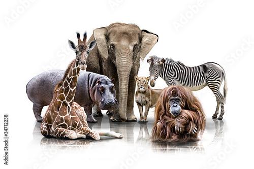 Türaufkleber Afrika Gruppen Tierportrait