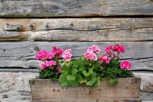 Alter Blumenkasten