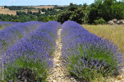 Tuinposter Lavendel Lavande en Provence 30