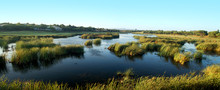 Natural Marshlands