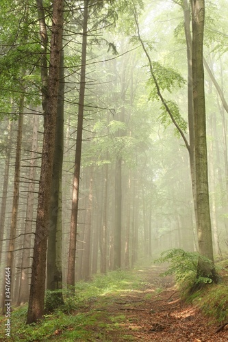 Papiers peints Foret brouillard Path on the border between pine and beech trees