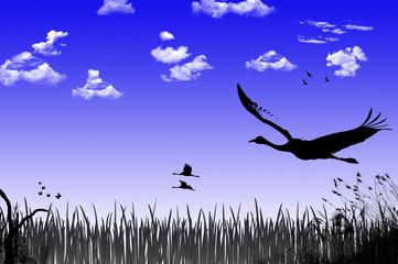 Fototapeta Vögel im Flug - FotoArt
