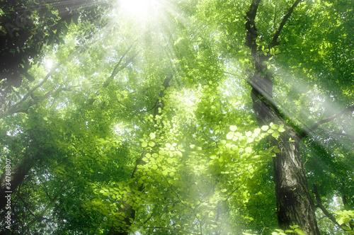 Fotografía  新緑の森