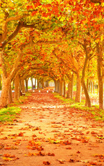 Fototapeta Nice pathway at autumn