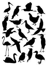 Silhouettes Of Birds