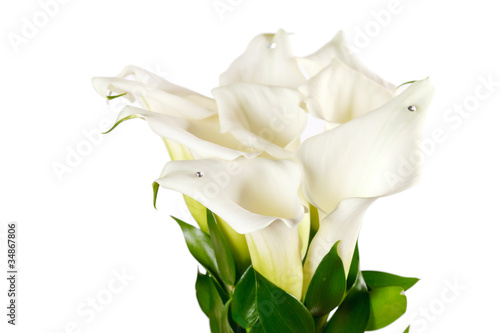 Fotografia calla flowers