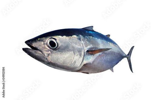 Printed kitchen splashbacks Fishing Bluefin tuna isolated on white background real fish