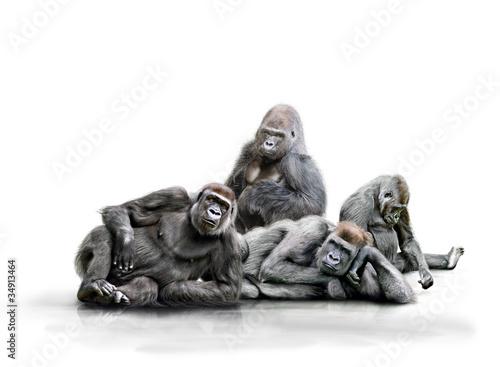 Spoed Foto op Canvas Aap Affenbande