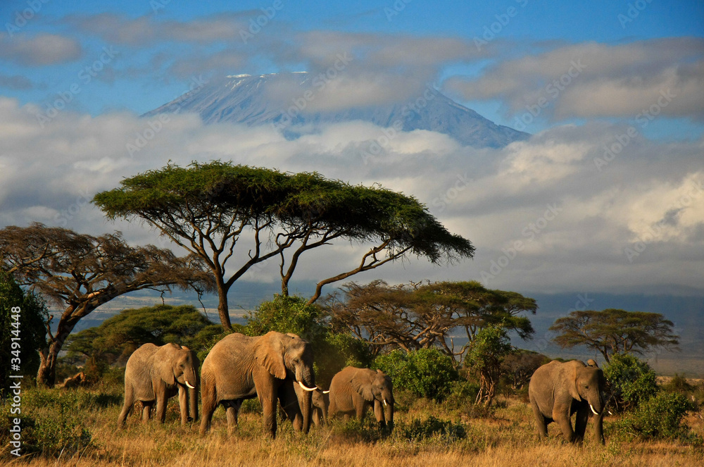 Fototapety, obrazy: Elephant family in front of Mt. Kilimanjaro