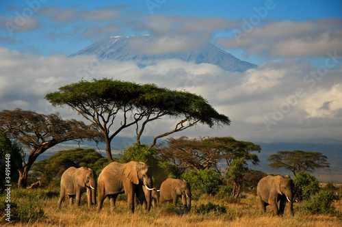 Poster Afrika Elephant family in front of Mt. Kilimanjaro