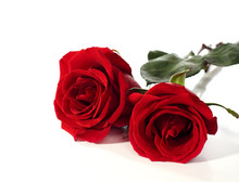 Two Red Roses Lying On A White Background.