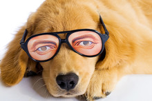 Pet With Silly Glasses
