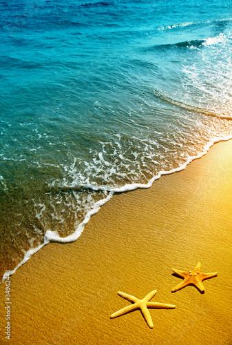 Photo starfish on a beach sand