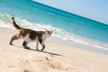 Сat Walks On The Beach