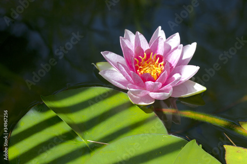 Recess Fitting Lotus flower Water lily flower