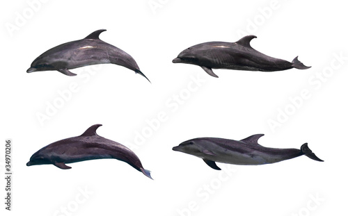 Poster Dolfijnen Dolphin isolated on white background