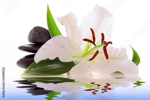 Photo Stands Water lilies Steine,Wellness