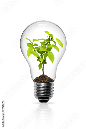Photographie  Light Bulb with sprout inside isolated