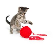 Cute Tabby Kitten Playing With Yarn