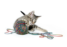Cute Tabby Kitten With Ball Of Yarn On White