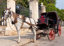 Horse Carriage Waiting For Tourists In Old Havana