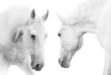 Fototapetawhite horses