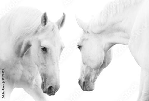 Foto op Canvas Paarden white horses