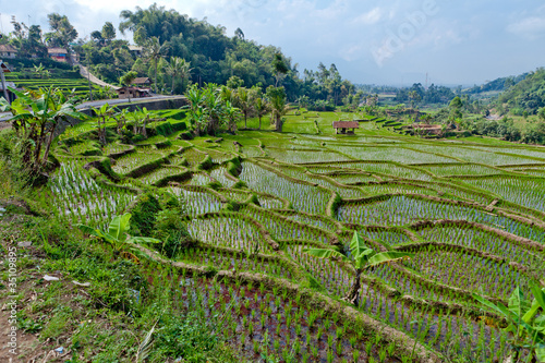 Tuinposter Bali agriculture indonésie