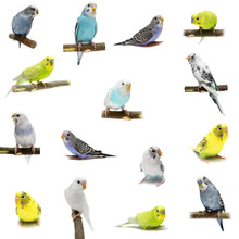 Set Budgies Isolated On White
