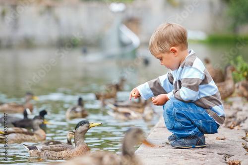 Carta da parati Cute little boy feeding ducks