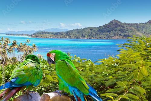 jaskrawa-papuga-przeciw-morzu-i-gorom