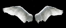 Angel Wings Isolated On The Bl...