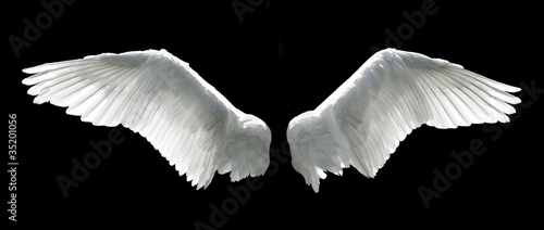 Angel wings isolated on the black background Fototapete