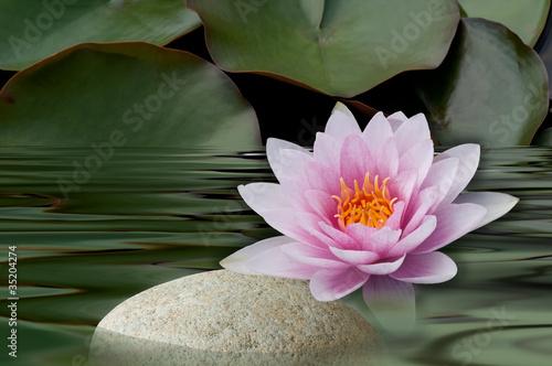 Foto op Canvas Waterlelies Seerose mit Stein