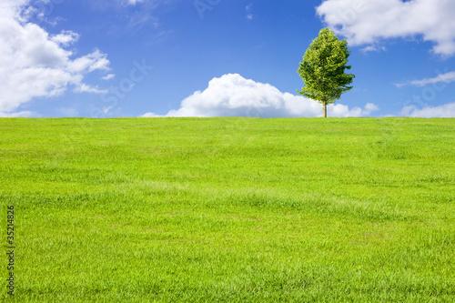 Obraz 草原と青空と木 - fototapety do salonu