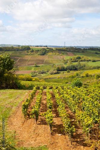 Papiers peints Vignoble paysage viticole