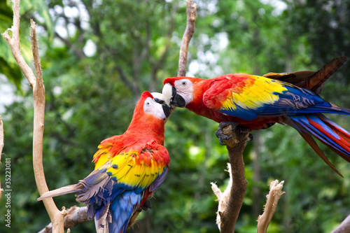 In de dag Papegaai Love Parrot