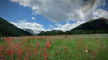 (1272) Summer Mountain Wildflowers Clouds Timelapse
