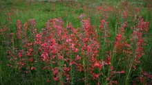 (1271B) Summer Mountain Wildflowers Country Road Colorado